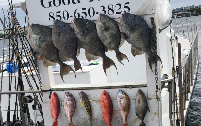 Destin, Florida Spring Break Fishing Report - Pelican Adventures